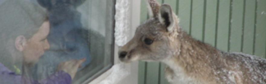 An inquisitive visitor at Gunuma